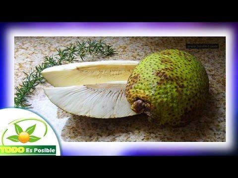 Fruta De Pan Propiedades Fruta De Yaca O Arbol Del Pan Para Que