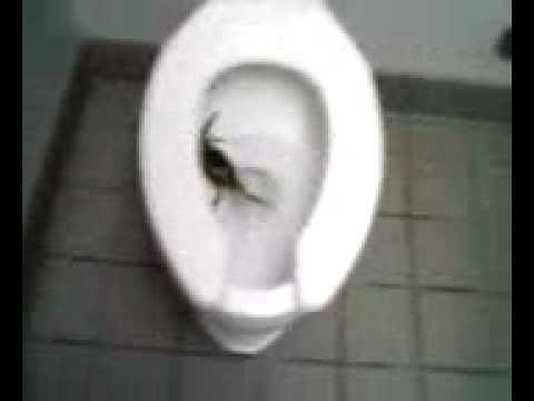 Taco Bell Has Crabs In Their Toilets Youtube