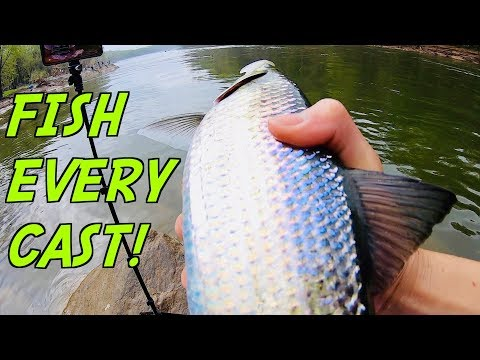CATCHING BIG FISH EVERY CAST!!! (RIDICULOUS Live Stream Fishing)