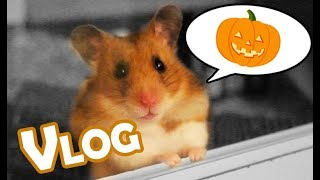 Kürbis für Hamster? 🐹🎃 Hallooween Vlog ♥ Tierisch schaurig! ♥