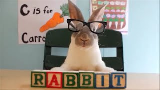 Rabbit Is Ready for School