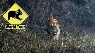 Nepal / Nez à Nez avec un Tigre La jungle | Maryse et Dany