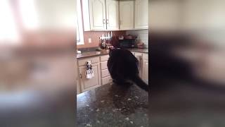 Cat FAILS 2018  !!!! Part2