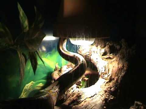 Die Schlange Film