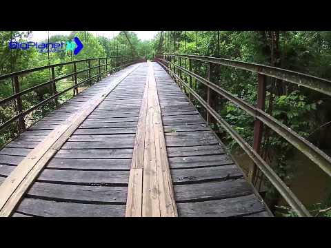 Swinging Bridges Lake of the Ozarks Flooded