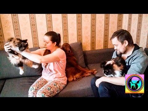 новости новосибирск сегодня видео