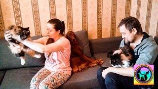 Две счастливые кошки из приюта едут домой | Two happy cats from a shelter go home