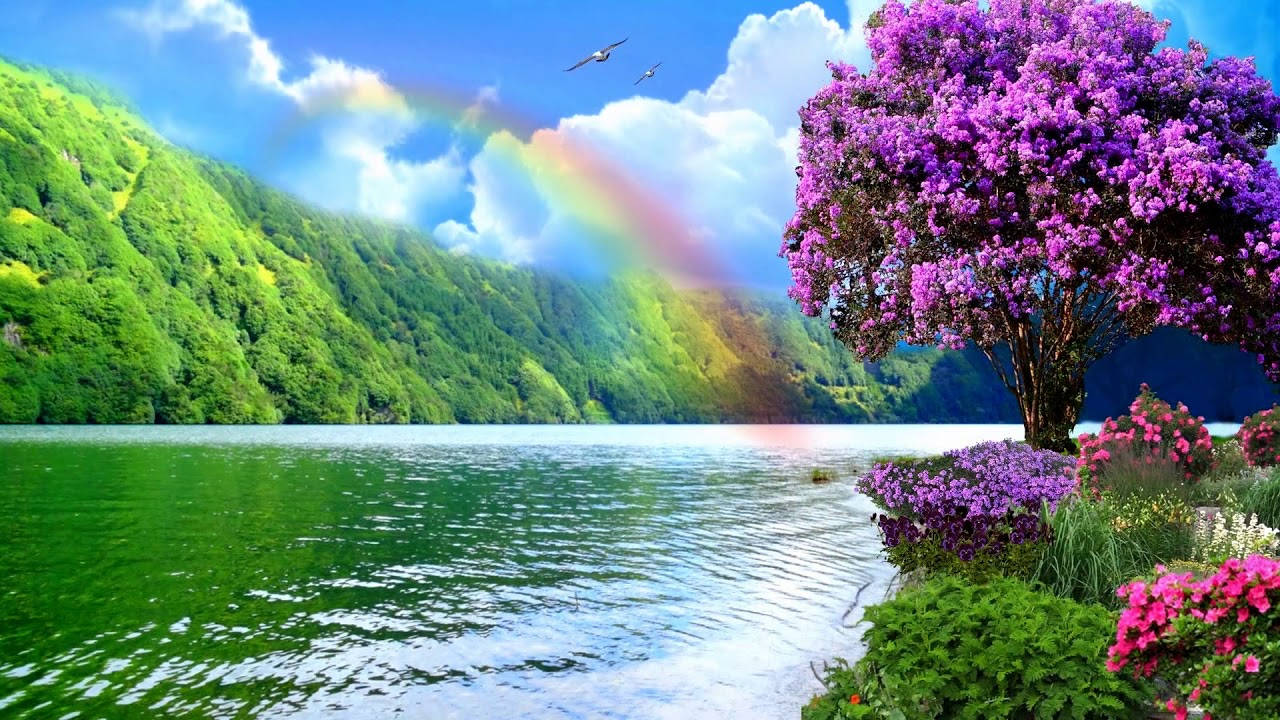 natural rainbows nature rainbow ciel
