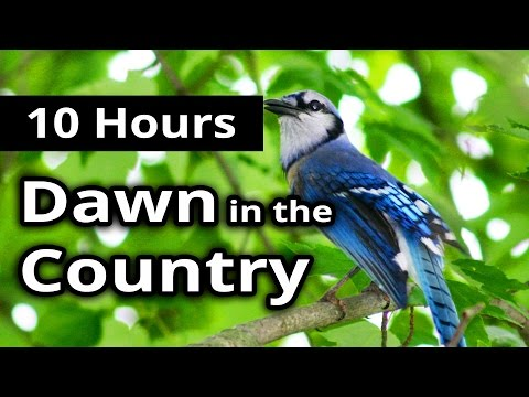DAWN in the COUNTRY Noises and Sounds - 10 Hours of Countryside Ambiance