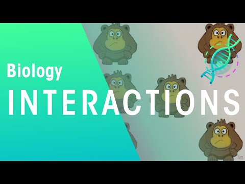 Ecology: Interspecific And Intraspecific Interactions | Ecology & Environment | Biology | FuseSchool