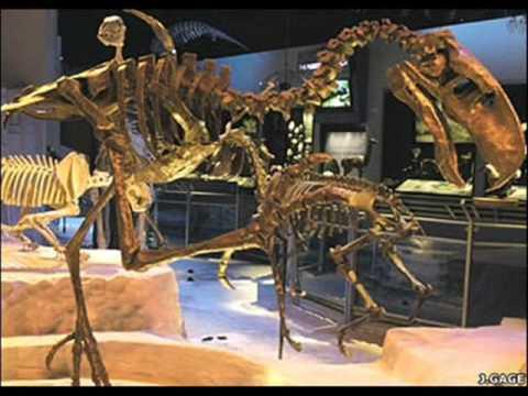 animales prehistoricos parte 4 ave del terror