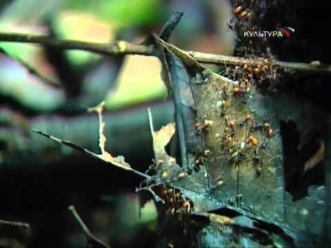 Город муравьев