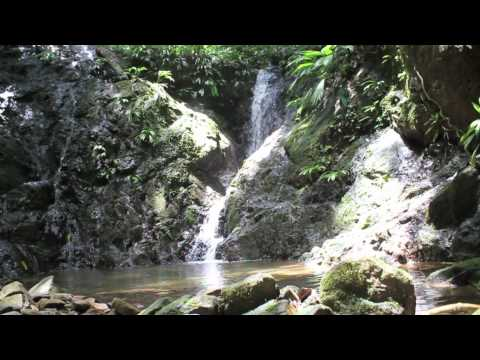 Panama Amphibian Rescue and Conservation Project.mov