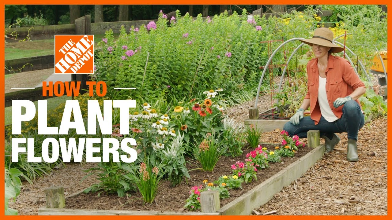 How To Plant Flowers The Home Depot
