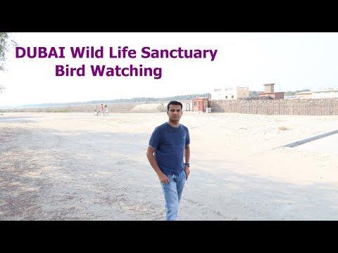 DUBAI Wild Life Sanctuary # Bird Watching # Flamingo # Mangroves
