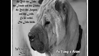 Unser Trauriger Abschied Von Fu Yang´s Arani (shar Pei)