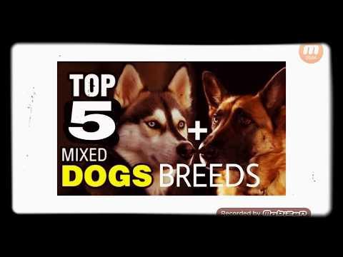 TOP 5 MIXED DOG BREEDS