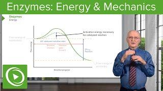 Enzymes: Activation Energy & Mechanics – Biochemistry | Lecturio