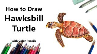 How to Draw a Hawksbill Turtle with Color Pencils [Time Lapse]