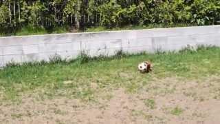 メルのサッカー.