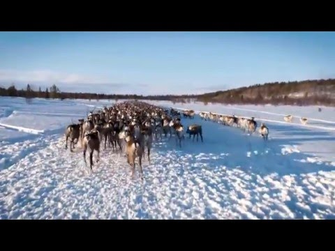 The Sámi People - Reindeer Herders