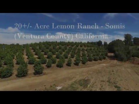 20 Acre Lemon Ranch   Somis Ventura County California