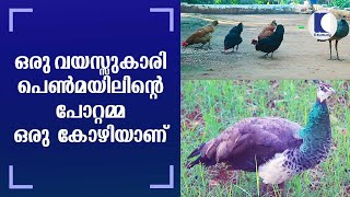 A Hen became stepmom of one-year-old female peacock | Wayanad