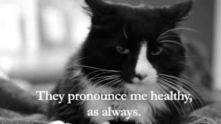吾輩はフランスの猫である。インターネット猫ビデオ祭で金賞を受賞した黒白猫「アンリ」のアンニュイなつぶやき