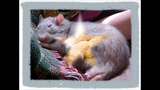 Фильм про крыс