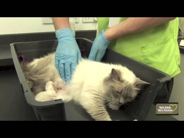 Kitten Birth Youtube