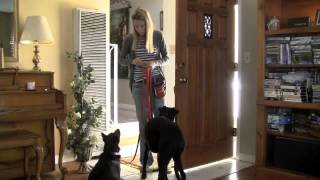 Dog Training for Dogs That Bolt, Dash Through Door, Dogs That Runaway
