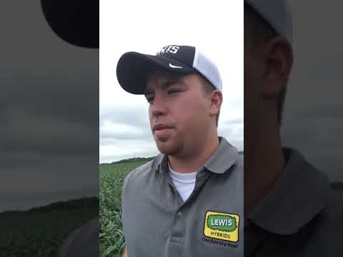 LEWIS 3572X Soybeans in Hancock County IL