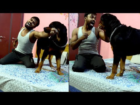 Fighting/Playing with my Rottweiler on bed : [ Bolt ]