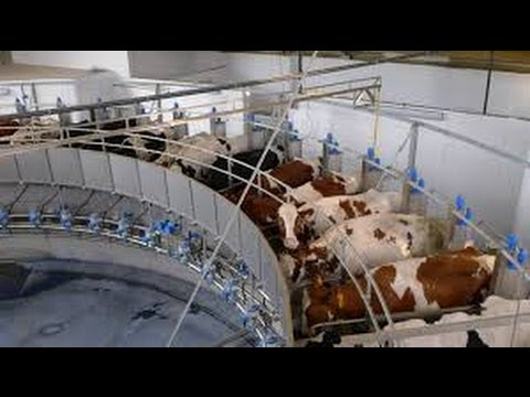 Why I DON'T support the Dairy Industry- with Gary Yourofsky