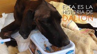 #Dalton Animales Sin Hogar (HD)