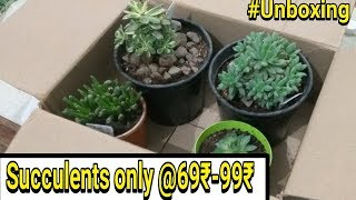 Video Beautiful Succulents From succulent factory download MP3, 3GP, MP4, WEBM, AVI, FLV Juni 2018