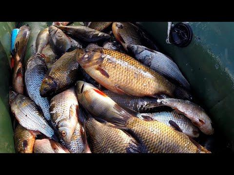 Рыбалка на сети. Очень много рыбы. Золотой карась!!!
