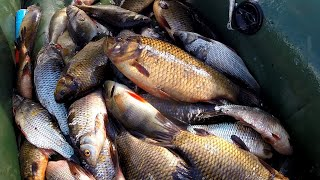 Рыбалка на сети Очень много рыбы Золотой карась