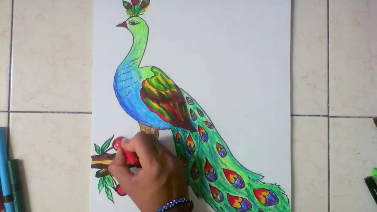 how to draw peacock in simple steps youtube