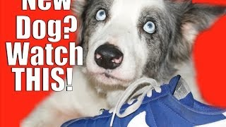 Dog Training: New Dog? You Need To Know This!