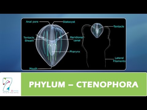 PHYLUM – CTENOPHORA