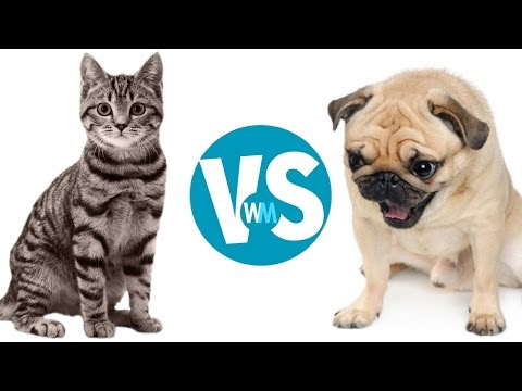 Thumbnail: Cats Vs Dogs: Which Makes a Better Pet?
