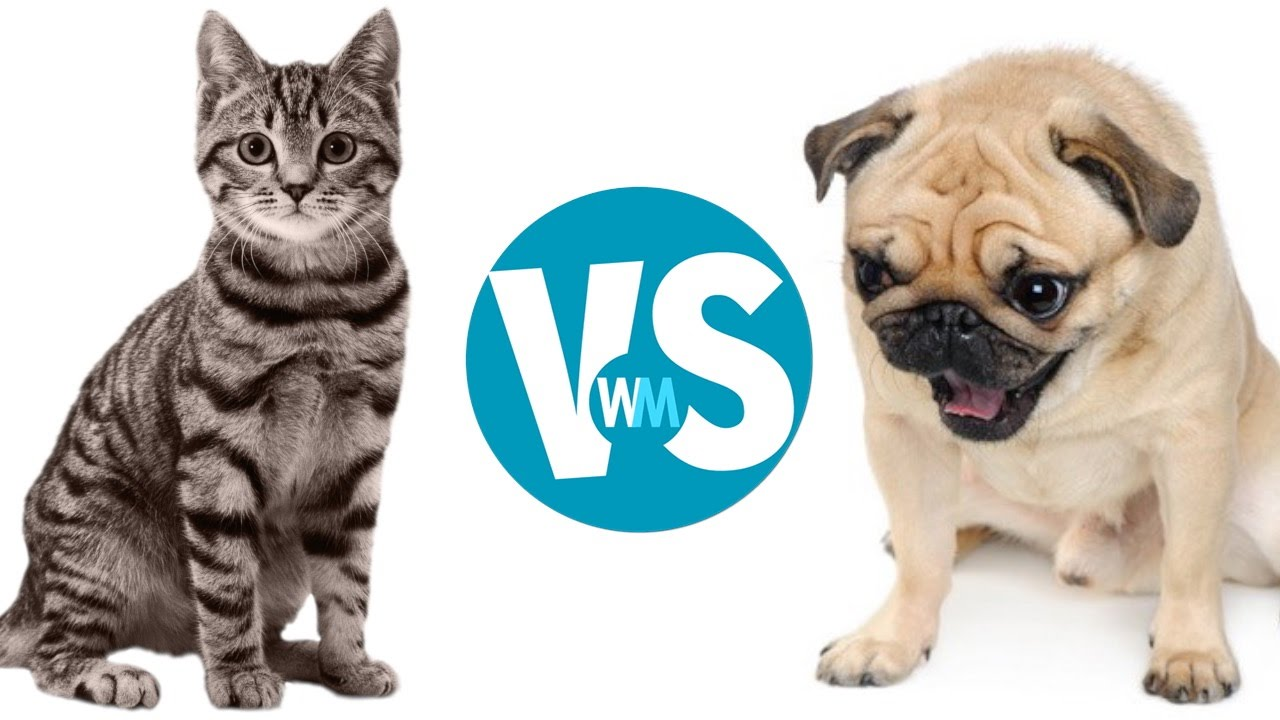 cats vs dogs which makes a better pet youtube