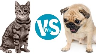 Cats Vs Dogs Which Makes a Better Pet