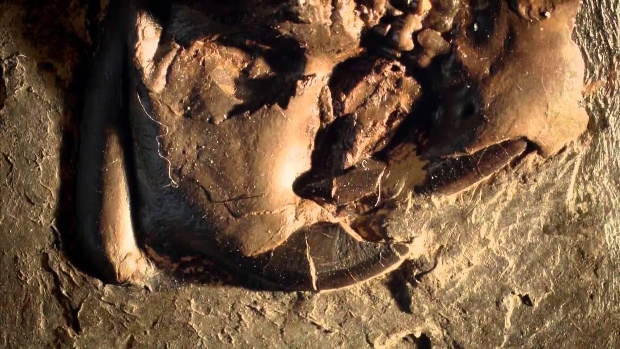 приветик самый старое живое существо на нашей планете виде миниатюры для