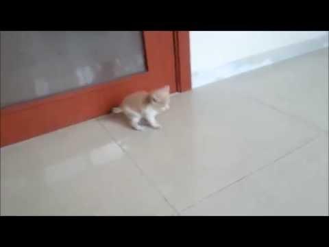 우리집에 따라 들어온 귀여운 새끼고양이