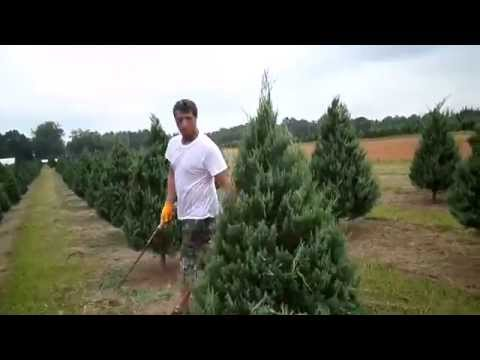 Trimming Christmas Trees Shawn Powers and Greg Powers