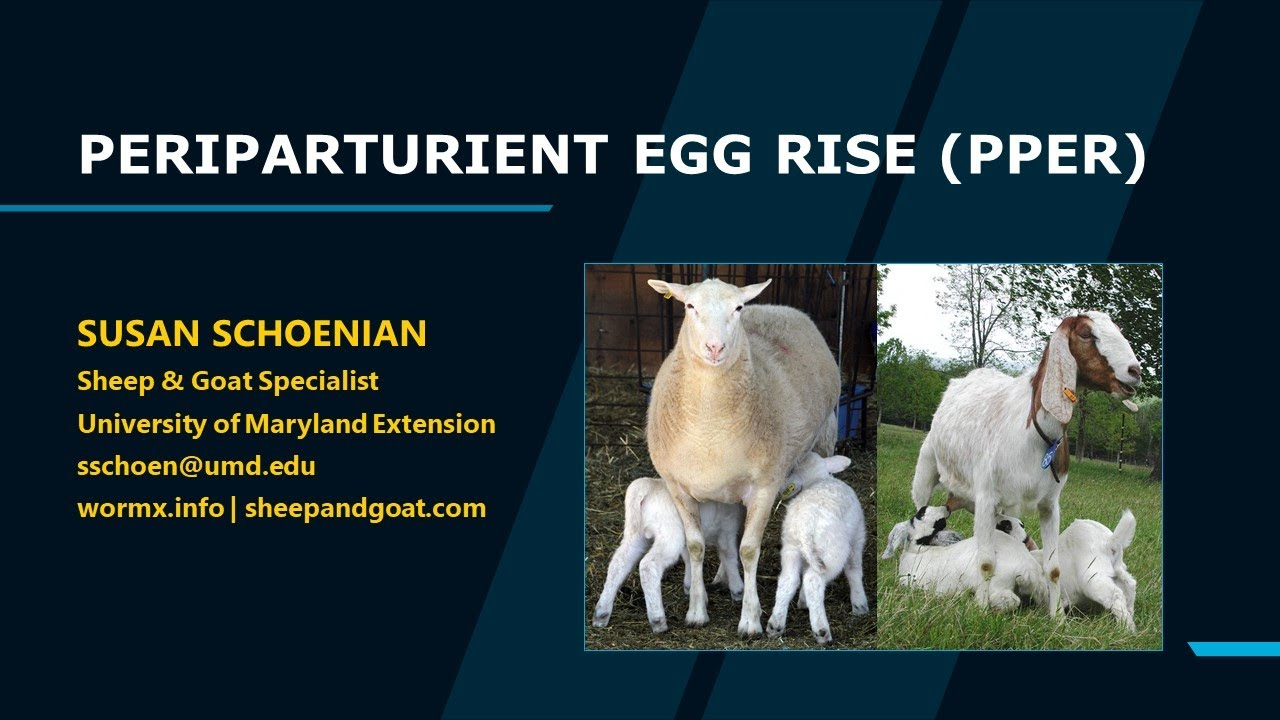 Resources: Periparturient Egg Rise