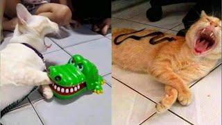 「귀여운 고양이」웃지 않으려 노력하십시오 가장 웃긴 고양이 영화 #4