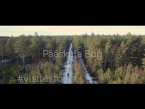 Travel Estonia - Pääsküla Bog - 4K